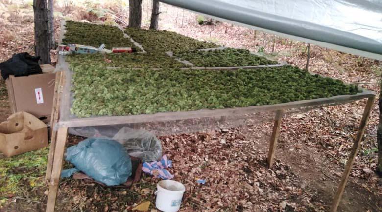 Заловиха двама със 780 кг марихуана в село Влахи