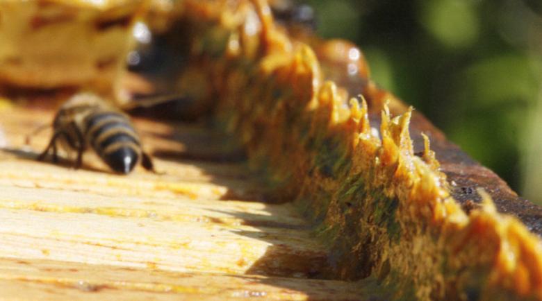 60 капки прополис спират грипа, лавандулов мед – балсам за нервите