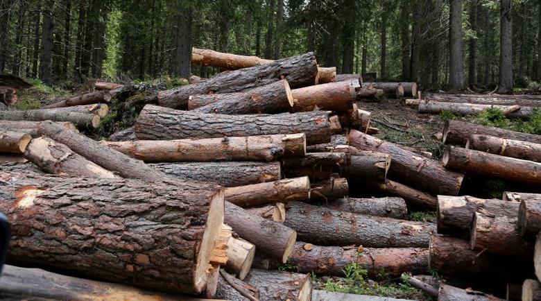 40% от фирмите за дърводобив фалират! Коронавирусът е намалил до минимум износа