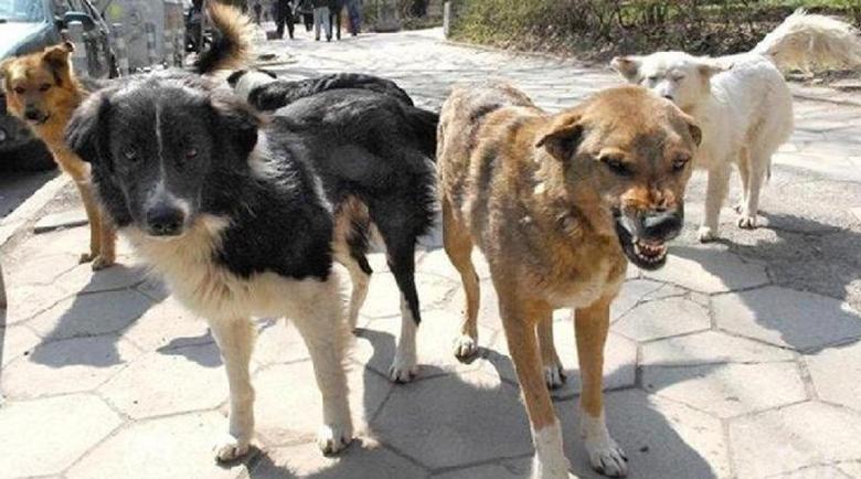 Глутница кучета тормозят жители на баровски столичен квартал