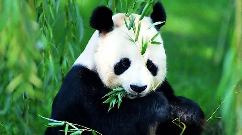 Отбелязваме Световния ден за защита на животните