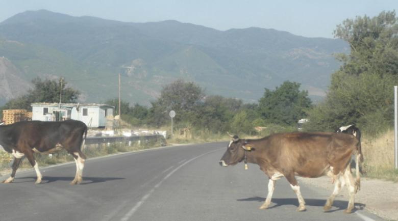 """Протест в """"Кремиковци"""": Кози и крави предизвикват катастрофи в столичния квартал"""