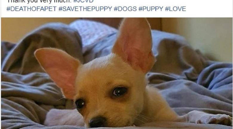 Нелегален ветеринар издал паспорта на кучето Рая