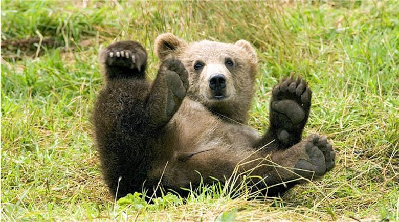 3-годишен мечок яде патиците и кучетата в с. Давидково