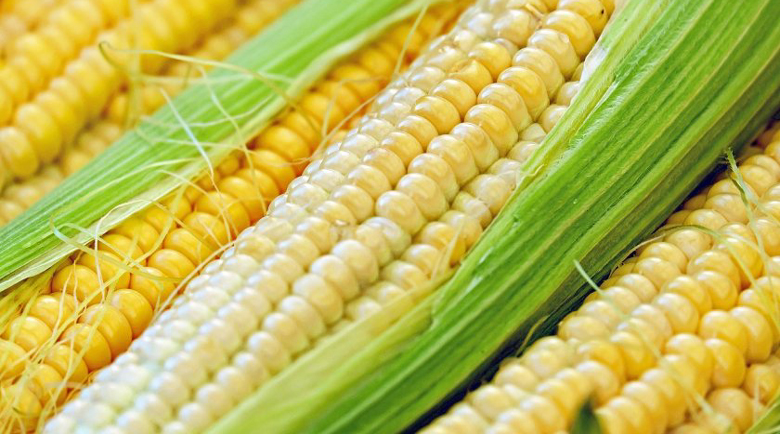 Обвинение за измама с 250 тона царевица