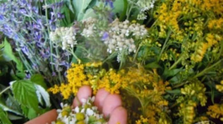 Пролетните дъждове и пандемията удариха търговията с билки