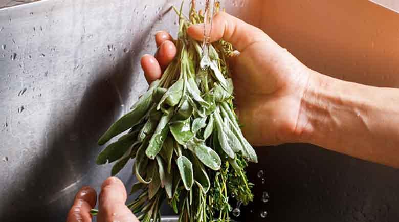 Лечебната мощ на малките зелени листенца няма равна