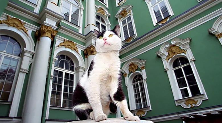Котките лекуват своите стопани: Мит или истина