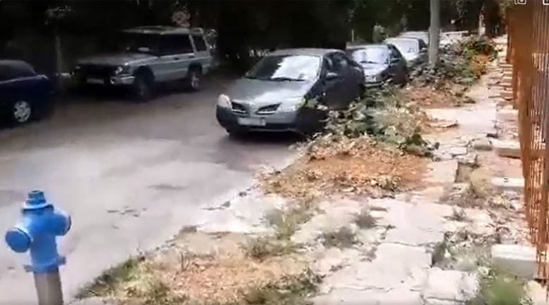 """Погром: Строител отсече 11 липи в презастроените """"Манастирски ливади"""""""