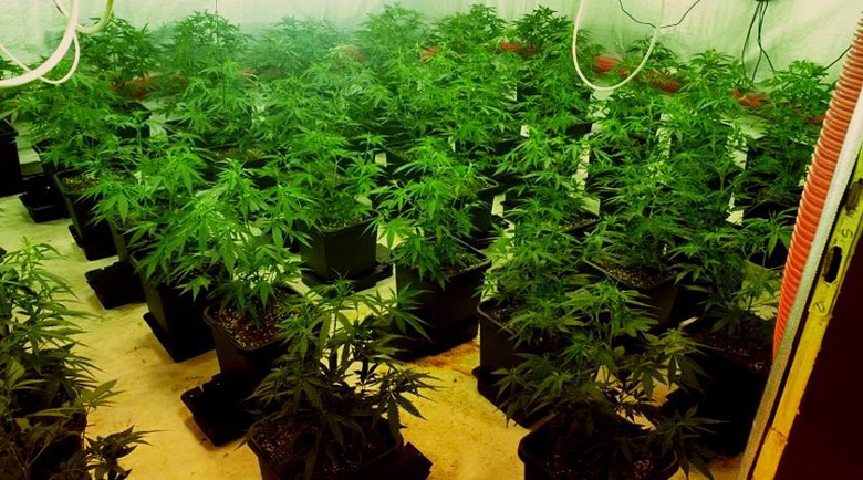 Полицията разкри високотехнологична оранжерия за марихуана в град Бяла